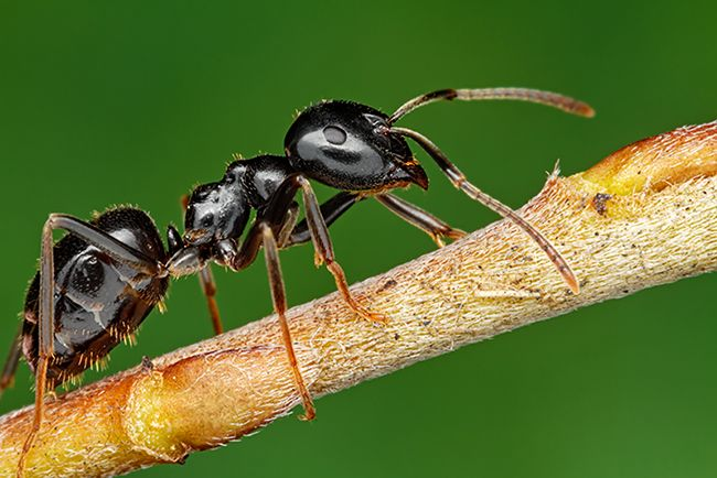 Ant on a small twig.