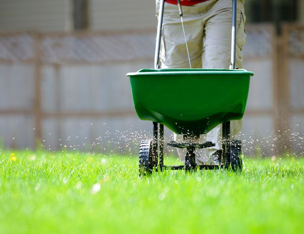 Fertilizer being spread in a lawn.