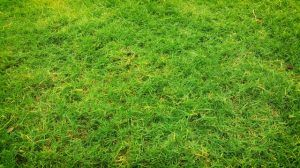 How to Keep Fungal Diseases Out of Your Lawn