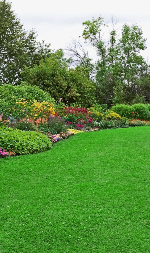 a yard treated by Organic Lawns with the premium plan