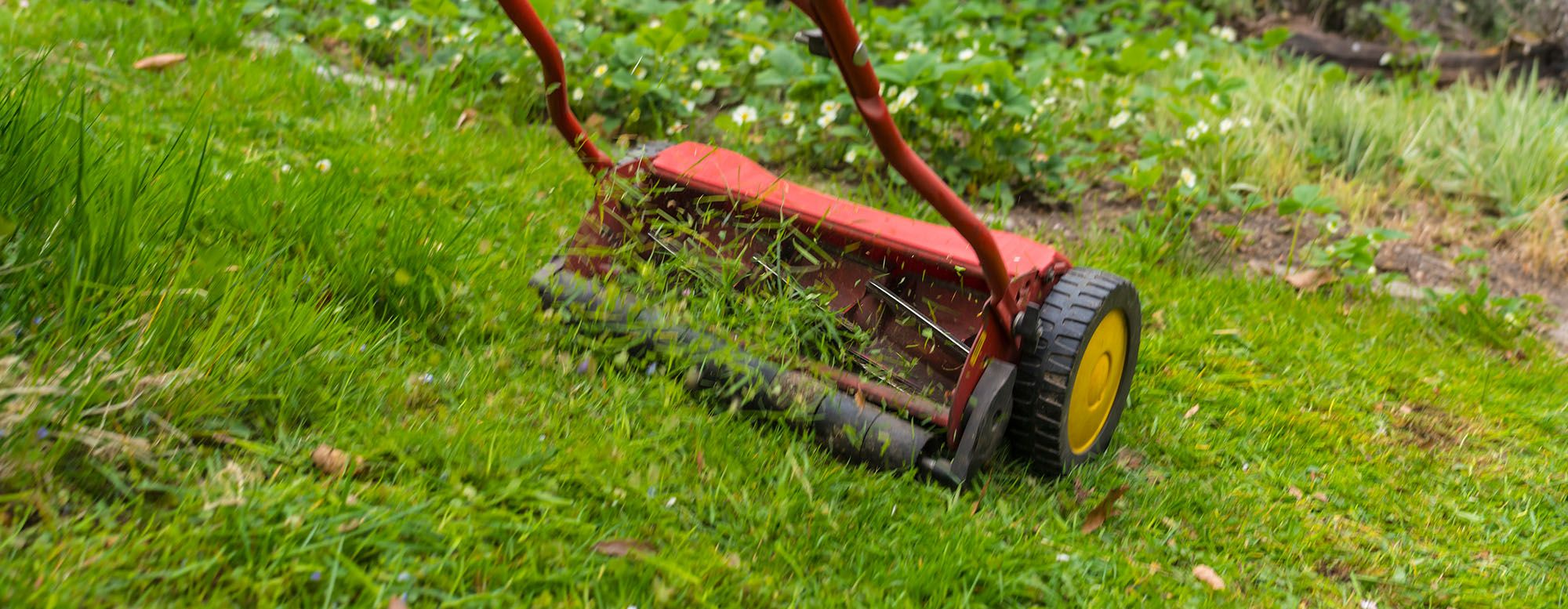 Someone pushing lawn mover in backyard on green grass.