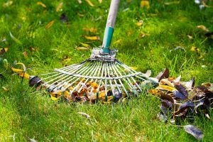 how to properly aerate your lawn