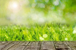 which grass seed is the best for your lawn